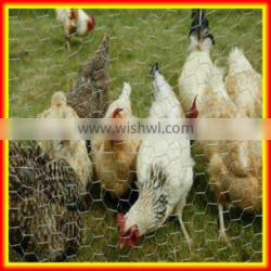 lowest price hot dipped or electro galvanized anping hexagonal wire netting for duck fence