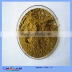 China Plant With HACCP,BRC Certificates Elecampane Extract Powder