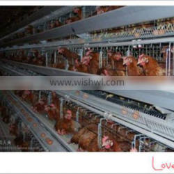 pyramidal layer chicken cages/poultry cage