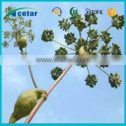 big sale of angelica root powder extract health benefits on sales
