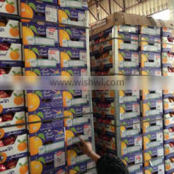 New Harvest Fresh Orange with Best Quality From Egypt