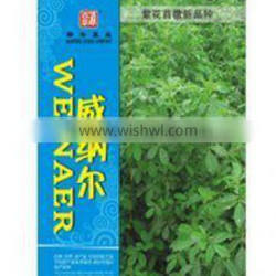 High quality alfalfa grass seed WEINAER for planting