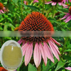 Super Echinacea extract powder from GMP ISO HACCP certified manufacture