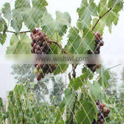 Competitive Price White Color Vineyard Bird Netting For Sale