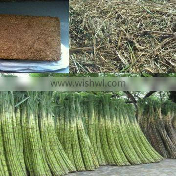 VIET NAM UNFERMENTED BAGASSE FOR ANIMAL FEED