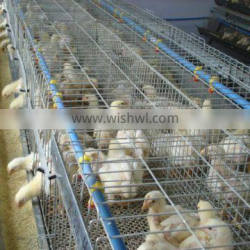 best quality chicken cage laying hens both for layers and broilers