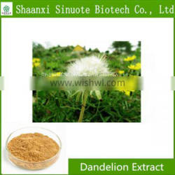 Factory Supply Pure Natural Dandelion Root Extract Flavonoids 5%