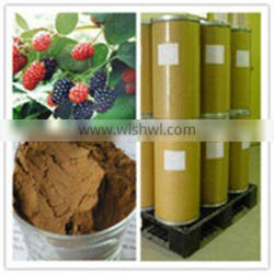 Top Quality Mulberry Extract 100% Natural from GMP Manufacturer