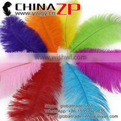ZPDECOR No.1 Supplier in China Factory Exporting Wholesale from 25cm to 30cm Dyed Ostrich Feathers for Sale