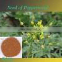 Natural Hot sale Pepperweed Seed Extract,High quality Pepperweed Seed Extract powder