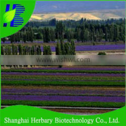 High quality lavandula seeds for sowing