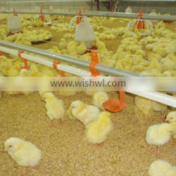 chicken ground raising equipment with automatic feeding and drinking line