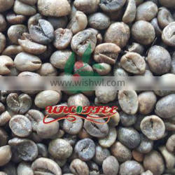 green robusta coffee beans