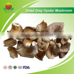 Most Popular Dried Gray Oyster Mushroom