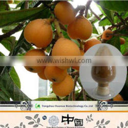 2015 new products FREE SAMPLE Maslinic Acid natural organic Loquat Leaf Extract