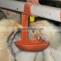 Automatic Drinking Line System for Broiler Chicks