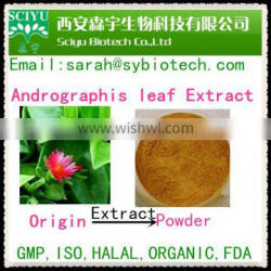 HOT SALE 5% 10% Andrographis paniculata Extract