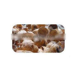 High Quality Cheap dried coconut shell