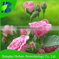 High germination rose plant seeds for sale