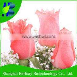 High quality rose plant seeds for sowing