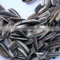1.78-2cm sunflower seeds in shell form china