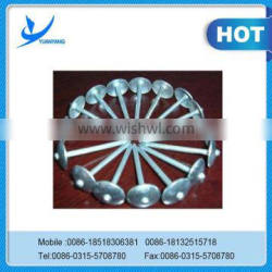 High quality Steel umbrella head Roof nail made in china