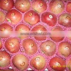 Chinese Red Star Apple