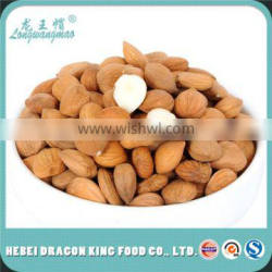 Dried Bitter Apricot Kernel Seeds