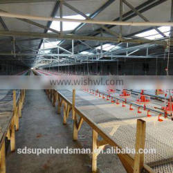 farming poultry for broler chicken with ground feeding system
