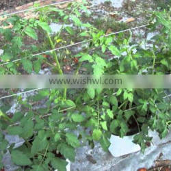 COCOPEAT GROW BAG IDEAL FOR GROWTH OF HYDROPONICS