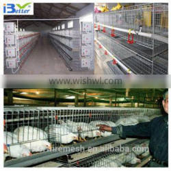 BT Factory hot-sale H type commercial broiler chicken cages(Factory price)