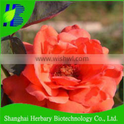 Top quality rose flower seed for sowing