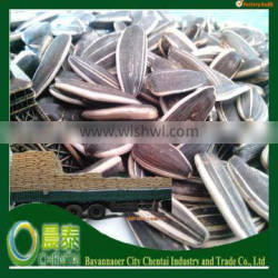 Wholesale Striped High Quality Hulled New Roasted Sunflower Seeds