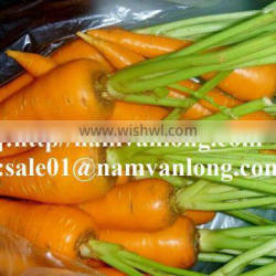 Export Fresh Carrot With High Quality And Competitive Price 2016