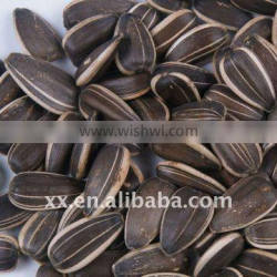 wholesale Chinese confectionery Black Striped Sunflower Seeds