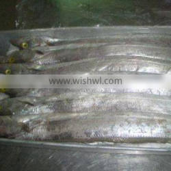 Frozen Ribbon Fish - Frozen leather jacket- High Quality and Best Price