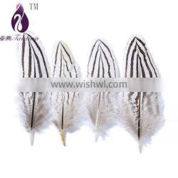 duck feathers for sale
