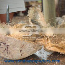 Fresh Coconuts Exporters From India