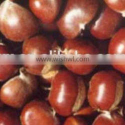 2015 new crop Chinese fresh chestnut for hot sale