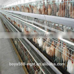day old chicks rearing cage to raise pullets