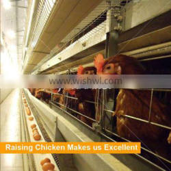 large scale poultry farm design / automatic egg chicken layer battery cages