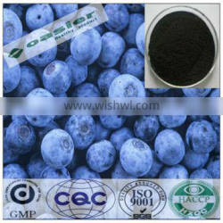 Natural GMP hot sale 10%-25% Anthocyanidin 15%chlorogenic Blueberry Extract