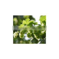 European Hot Flower Extract Humulus lupulus Make beer has relaxed aromatic gas, bitter and anticorrosive force,form the bubbl