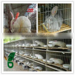 rabbit cage design with feeder and drinker