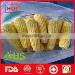 White and yellow corn for animal feed
