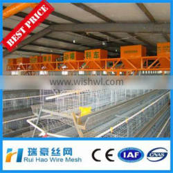 Hot selling Factory design broiler chicken cages