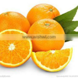 Hot product Citrus Aurantium Extract Supplement from good quality hesperidin