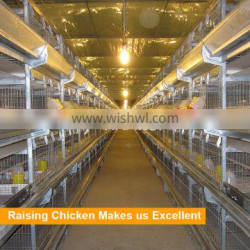 Hot sale automatic pullet equipment with competitive price in Bangladesh