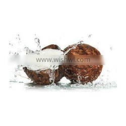 Exceptional Indian Coconuts