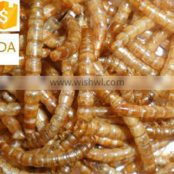 good quality and nutritious poulltry feed dried mealworm